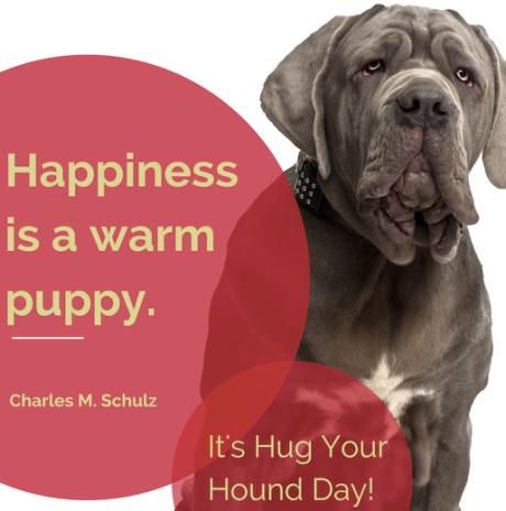 hug hound
